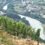 Azienda Agricola Boffalora - Stappo Distribuzione Vini Roma